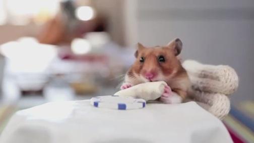 Tiny-hamster-eats-tiny-burrito